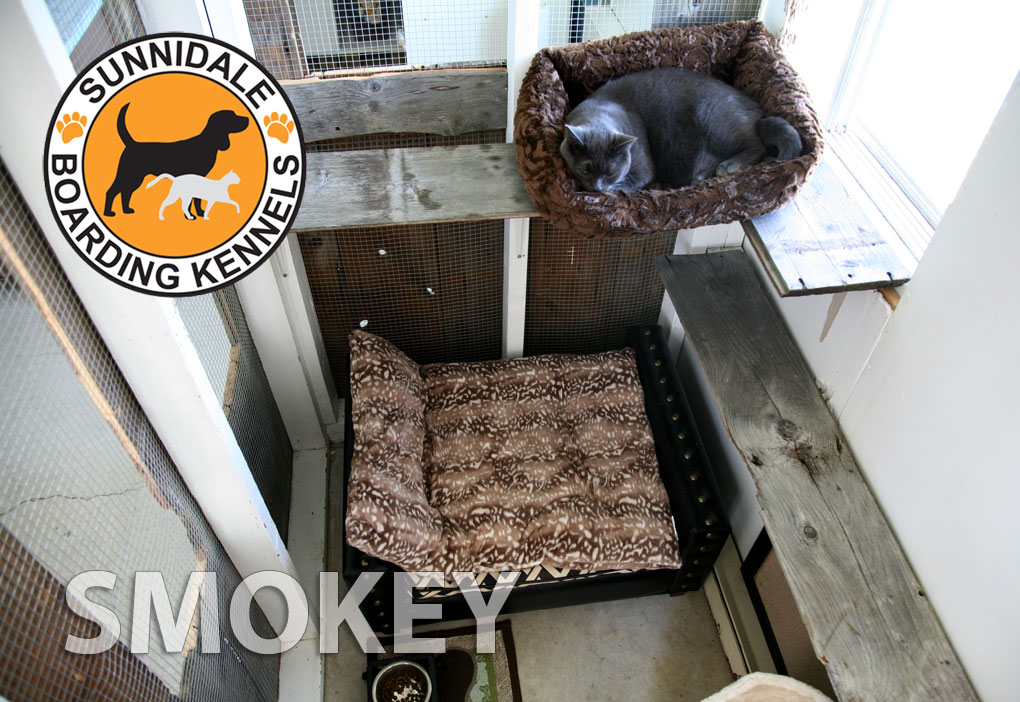 Barrie Ontario country side boarding cat kennels for your