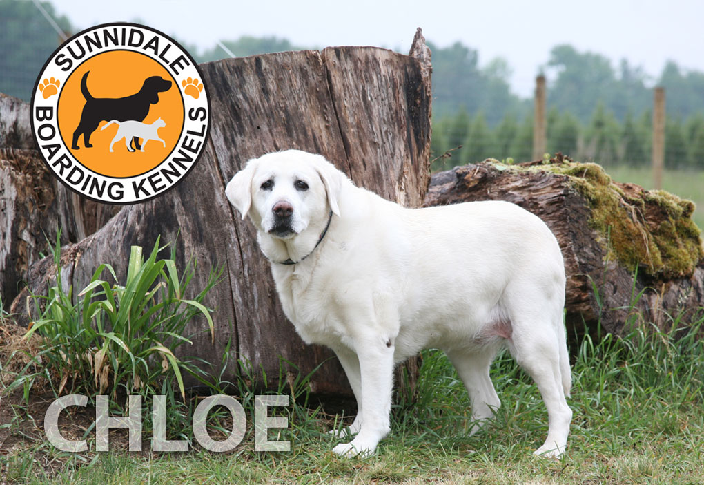 What Our friends have to say about Sunnidale Boarding Kennels - Dog